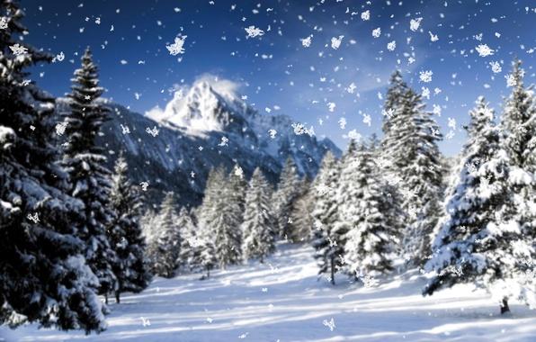 Картинка холод, зима, иней, макро, снег, деревья, горы, снежинки, природа, дерево, елки, елка, новый год, ель, …