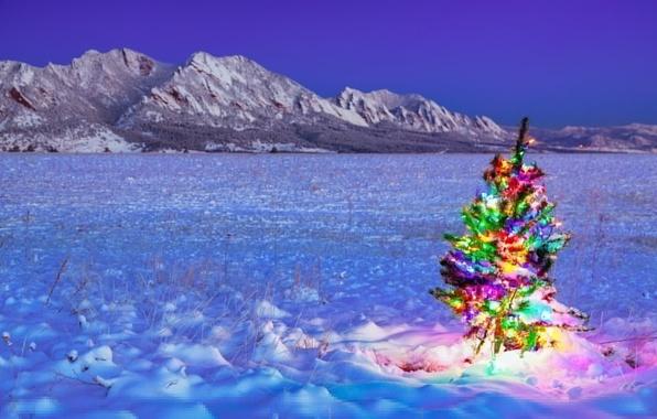 Картинка зима, поле, праздник, ёлка