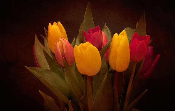 Картинка листья, букет, лепестки, тюльпаны