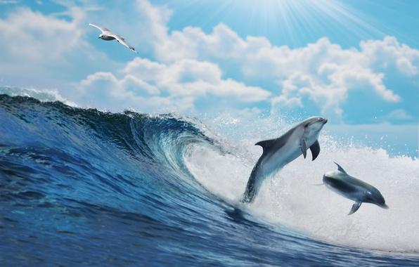 Картинка море, вода, океан, волна, sky, sea, ocean, blue, splash, wave, dolphins