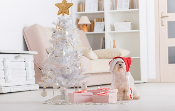 Картинка праздник, новый год, рождество, собака, christmas, new year