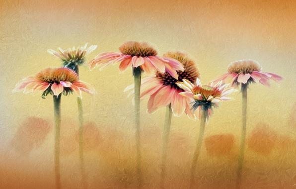 Картинка цветы, фон, цвет, текстура