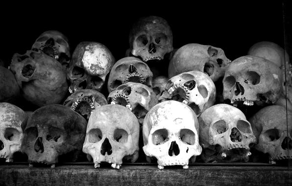 Картинка черно-белая, склад, кости, черепа