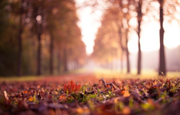 Листья кленовые желтые бордовые