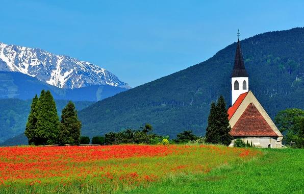 Картинка деревья, цветы, горы, маки, Австрия, Альпы, луг, церковь, Austria, Alps, Шнеберг, Peterskirche, Schneeberg, Ternitz, Терниц