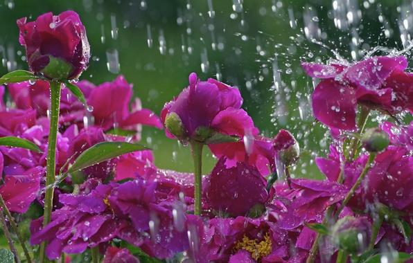 Картинка цветок, капли, макро, цветы, дождь, поляна, стебель, flower, macro