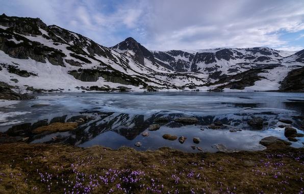 Фото обои цветы, снег, Рила, горы, Болгария, облака, Национальный парк Рила, Ribnoto озеро