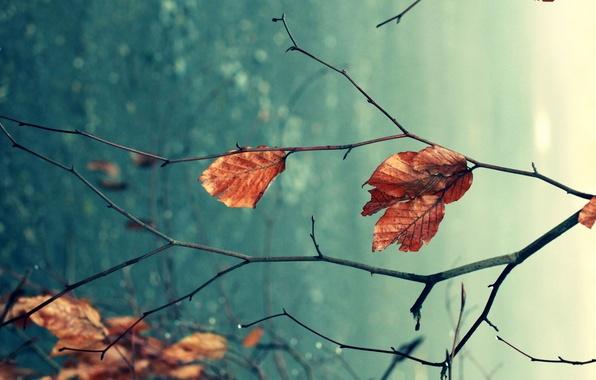 Картинка осень, листья, макро, ветки, природа