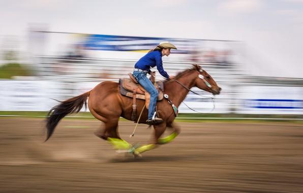 Картинка конь, спорт, бег