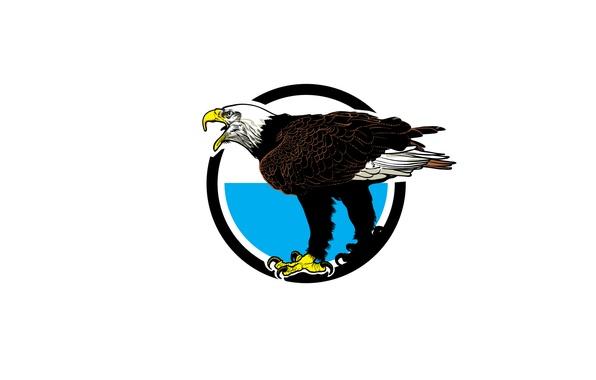 Картинка птица, орел, хищник, клюв