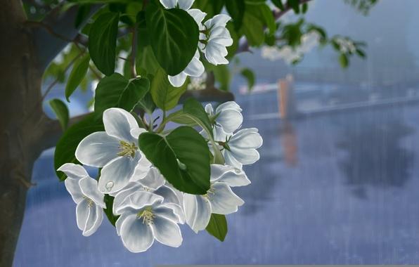 Картинка листья, капли, цветы, дождь, дерево, рисунок, ветка, арт, белые, яблоня