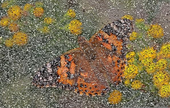 Картинка макро, цветы, бабочка, боке, ванесса чертополоховая, репейница, чертополоховка