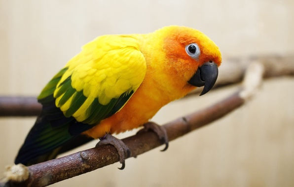 Картинка глаза, птица, ветка, Попугай