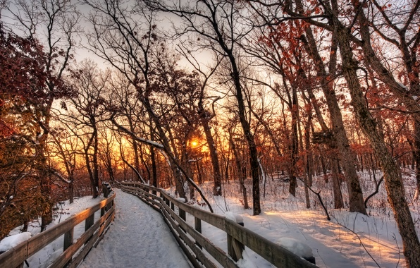 Картинка зима, лес, небо, солнце, облака, снег, деревья, пейзаж, закат, природа, путь, white, белые, forest, sky, …