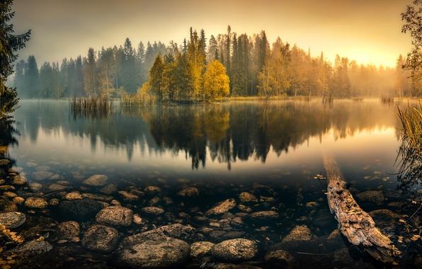 Картинка осень, лес, вода, деревья, туман, озеро, отражение, камыши, камни, рассвет, утро, Tranquil Morning, Lauri Lohi