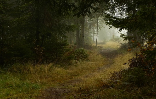 Картинка осень, деревья, природа, туман, тропа, Лес, ели, тропинка