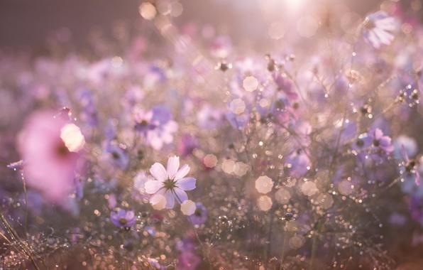 Фото утро и цветы