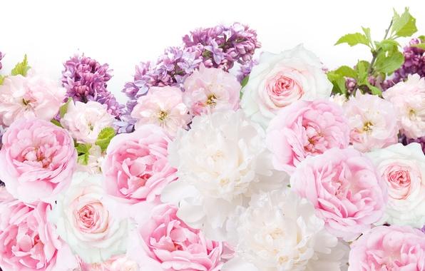 на заставку картинки цветы