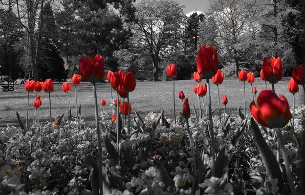 Картинка деревья, цветы, пруд, парк, тюльпаны, клумба, скамья
