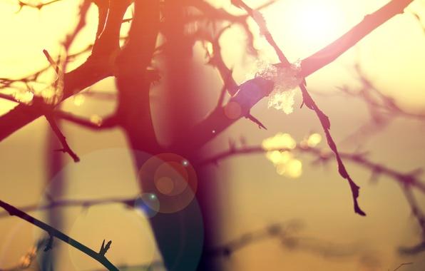 Картинка макро, свет, ветки, природа, дерево, утро