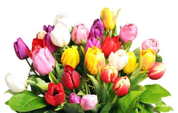 Картинка букет, тюльпаны, белый фон, разноцветные, мокрые