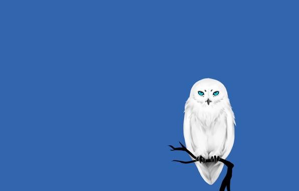 Картинка дерево, сова, птица, минимализм, ветка, белая, синий фон, owl