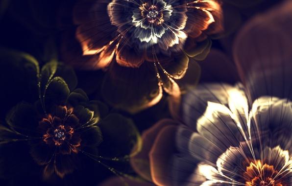 Картинка свет, цветы, абстракция, обои, графика, фрактал