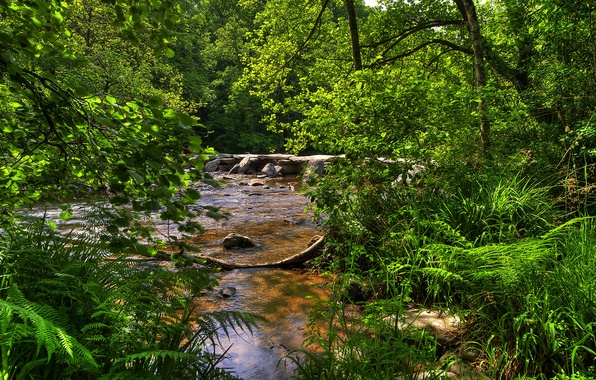 Картинка лес, деревья, ветки, ручей, камни, Великобритания, кусты, Exmoor National Park