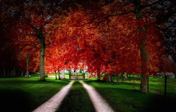 Картинка дорога, осень, трава, листья, деревья, дом, ворота, двор