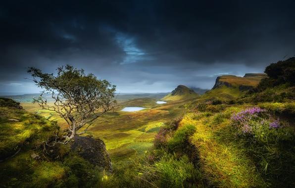 Картинка лето, трава, облака, цветы, горы, тучи, дерево, скалы, холмы, долина, Шотландия, озёра, Август, остров Скай, …