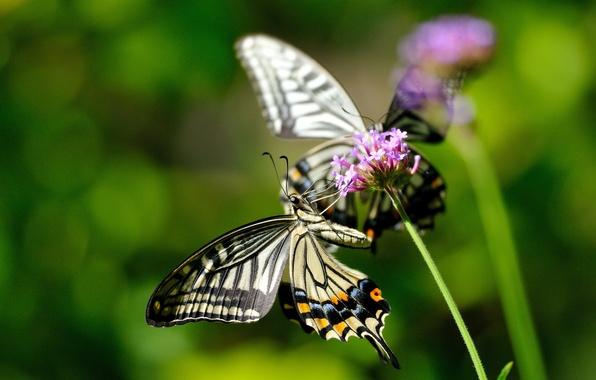 Картинка цветок, макро, бабочки, цветы, насекомые, природа, растение