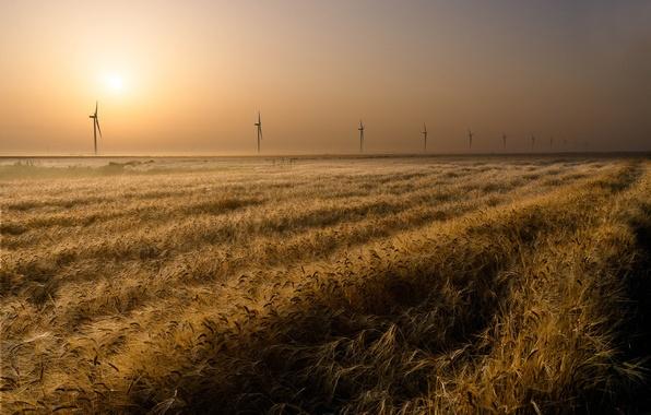 Картинка поле, горизонт, ветряки
