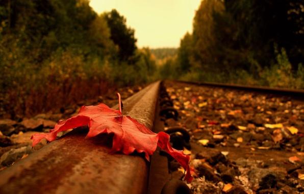 Картинка дорога, осень, лист, рельсы