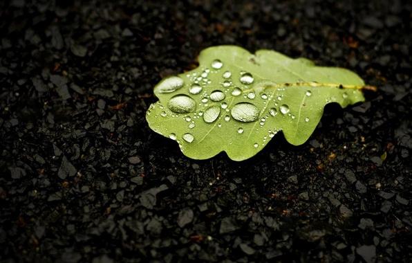 Картинка вода, капли, макро, лист, дуб
