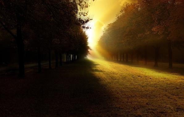 Картинка свет, деревья, тень