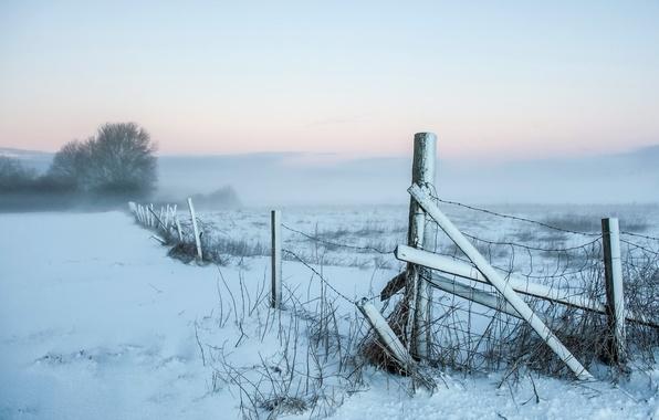 Картинка поле, снег, пейзаж, туман, забор, утро