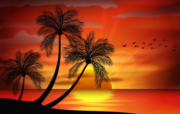 Vector Sunset Sea Paradise Amazon Tapety Palmy