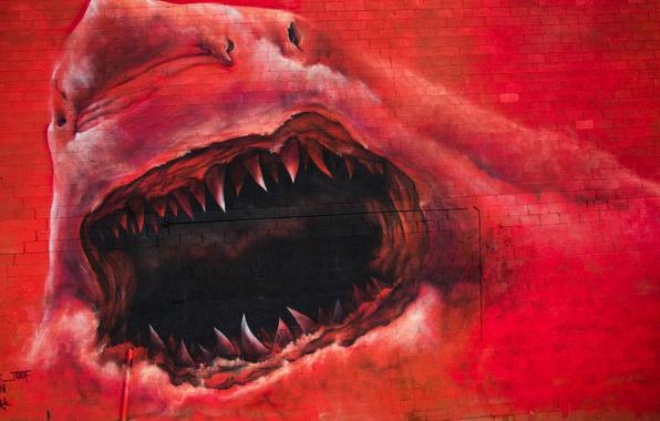Картинка фон, стена, граффити, акула