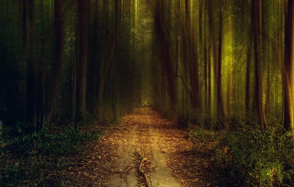 Картинка дорога, зелень, осень, лес, трава, свет, деревья, природа, вечер, тропинка, кусты