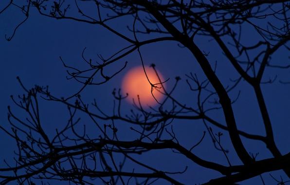 Картинка небо, облака, ночь, дерево, луна, силуэт, Mexico, Tabasco
