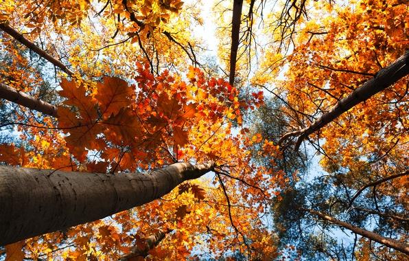 Картинка осень, лес, небо, листья, деревья, пейзаж, природа, forest, sky, trees, landscape, nature, autumn, leaves, 2560x1600