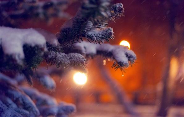 Картинка зима, макро, снег, природа, огни, дерево, елка, ель, ветка, вечер, ёлка
