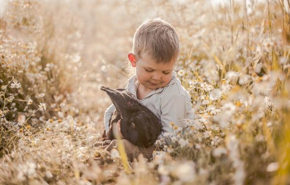 Картинка цветы, настроение, ромашки, мальчик, кролик, луг, дружба, друзья
