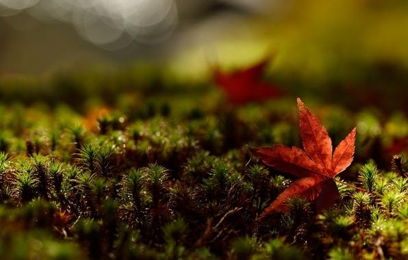 Картинка зелень, трава, листья, макро, красный, фон, обои, листик, wallpaper, листочек, широкоформатные, background, полноэкранные, HD wallpapers, …