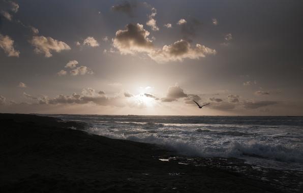 Картинка море, пляж, солнце, птицы, чайки, утро, горизонт
