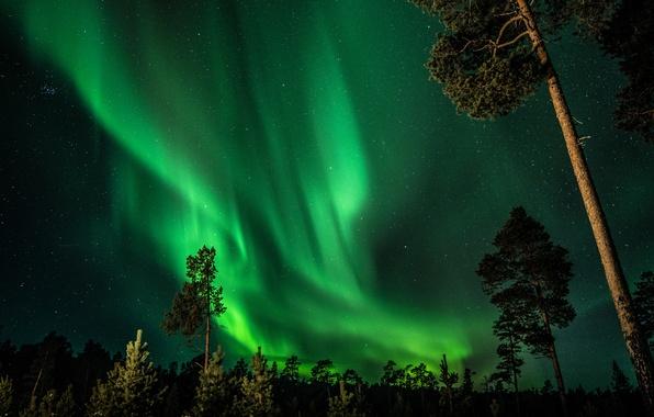 Картинка лес, небо, звезды, деревья, ночь, северное сияние, Финляндия