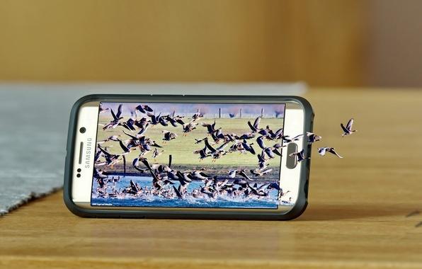 Картинка птицы, природа, смартфон, Samsung, Samsung Galaxy S6 Edge