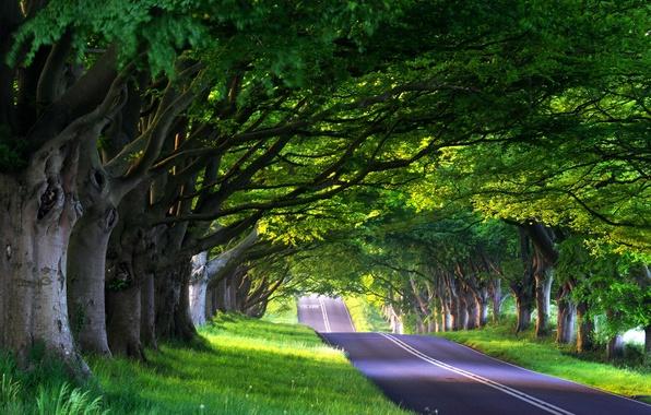 Картинка дорога, лес, лето, деревья, природа, путешествия, путь, дерево, дороги, весна, аллея, путешествие, road, way, аллеи