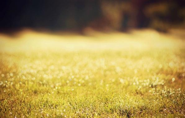 Картинка зелень, трава, солнце, капли, макро, природа, роса, боке