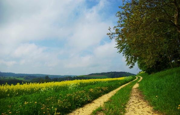 Картинка дорога, поле, лес, лето, трава, деревья, цветы